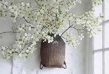 Les fleurs ... leurs couleurs ... / by Ninette*