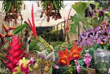 Orchid & Exotic Plants at Stephward Estate / by Stephward Estate