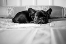 *Frenchie Faunatjes* / by MoiMy2