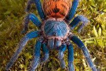 Invertebrates & reptiles