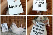 Going Rattie!