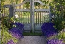 Garden / tuinen
