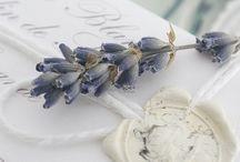 Lovely lavender......