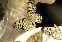 "Butterfly "":)0 / by Jeane Campbell"