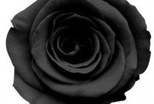 Dark/black roses ✔️ / Black/dark Roses can be posted on this board real/fake fun please add people ❌⭕️❌⭕️