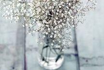 C'est le printemps ! (Spring) / Des fleurs, des couleurs fraîches et toutes douces, c'est sûr, le printemps est là !
