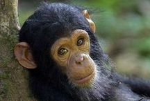 Monkeys / by Sharon Dyette