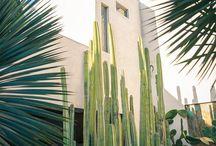 cacti+succulents