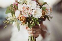 fleurs & couleurs