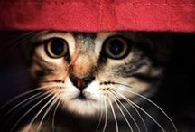 ANIMALS~CATS: FAVORITES / by Marilyn Murphy