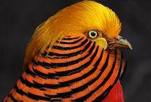 ANIMALS~BIRDS / by Marilyn Murphy