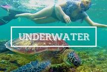 / UNDERWATER / A collection of #underwater #photos from all around the world. #diving #snorkeling #marine #fish #sharks #turtles
