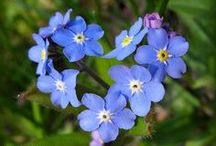 Forget Me Not / Please pin respectfully