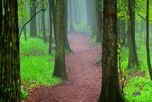 Woodland Walk / Please pin politely