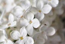 Wonderful White / Please pin respectfully