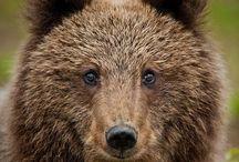 Teddy Bear / Please pin respectfully