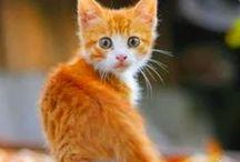 Orange cottage / Please pin respectfully