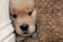 Puppys / Mascotas