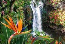 Tropické zahrady / tropical gardens, Tropische Gärten, jardins tropicaux, 热带花园, Тропические сады, jardines tropicales, jardins tropicais, tropiese tuine, الحدائق الاستوائية