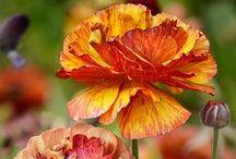Květiny / Flowers, Blumen, 花卉, Цветы, Flores, blomme, fleurs, الزهور