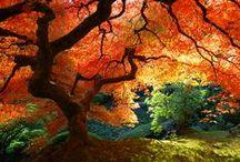 Stromy / Trees, Bäume, 树, деревья, árboles, árvores, bome, arbres, الأشجار