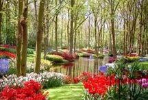TOP zahrady
