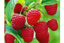 Ovoce / Fruits,Obst,水果,фрукты,Fruta,Fruto,vrugte,fruit, فاكهة