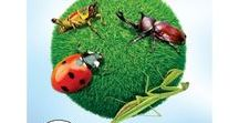 All About Bugs / Resources, activities, & crafts for learning fun about insects