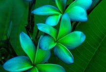 φυτα -- λουλουδια