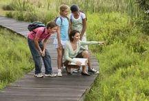 Homeschool Extras / Homeschool Extracurricular activities and subjects