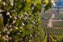 Wine Country / We love vineyards!