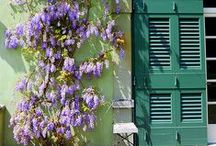 Flowers & Gardens ¤