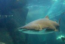 Aquarium animals / Some of the animals housed at the Two Oceans Aquarium