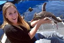 Aquarium activities / What you can do and experience at the Two Oceans Aquarium
