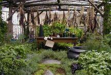 Herbalism and Herb Gardening