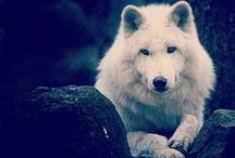Majestic Animals / Some pretty awesome animals  / by Stephanie Prokop