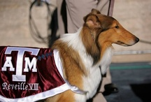 Texas A&M / by Lou Ann Bailey