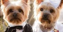 Pets / Our beloved pets are a part of our lives - let them be part of your wedding day, too!