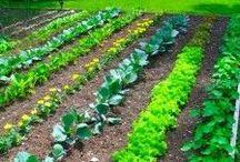 My Garden / Garden Ideas and Savings