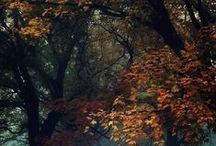 Autumn / Autumn | Leafs | Red | Brown | Yellow | Halloween