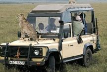 Travel ~ African Safari  🐅 / by R J
