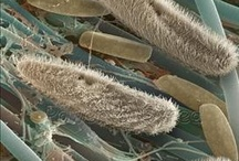KNOW microscopic! / Mostly choosing pics that interests me visually...the pics of human has got its own board.