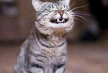 Crack me up, please / Dental Humor