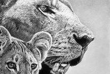 Illustration / Realistic Drawings