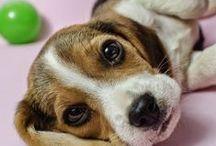 Cute Dogs♥
