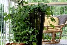 Parveke / Balcony / Parvekkeen uudelleen luonti on jokakesäinen hupini. Tässä taulussa kuvia omasta parvekkeeni kasveista ja sisustuksesta.