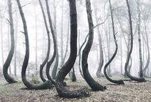 Rope/larppimateriaalia