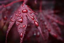 Autumn ~ Ősz