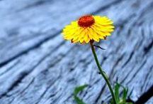 Plants ~ Flowers