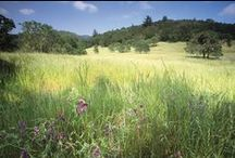 Bouverie Preserve / The 535-acre Bouverie Preserve near Glen Ellen, California, is home to diverse native ecosystems including oak woodlands, mixed evergreen forests, riparian woodlands, chaparral and grasslands.